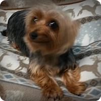 Adopt A Pet :: Molly - Muskegon, MI
