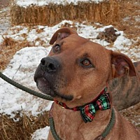 Adopt A Pet :: LIAM - Cordes Lakes, AZ