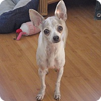 Adopt A Pet :: Gemma - Quail Valley, CA
