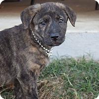 Adopt A Pet :: Sadie - Aubrey, TX