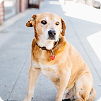 Adopt A Pet :: Stockton McCoy - Los Angeles, CA