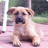 Adopt A Pet :: Rock - Snow Hill, NC