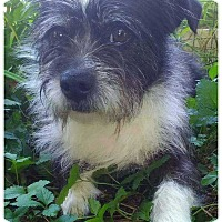 Adopt A Pet :: Grady - Mount Mourne, NC