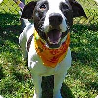 Adopt A Pet :: Tuff - St. Francisville, LA