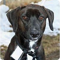 Adopt A Pet :: Sissey - Racine, WI