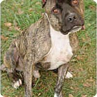 Adopt A Pet :: Beau - Chicago, IL