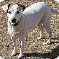 Adopt A Pet :: Maddie in OK - Oklahoma City, OK