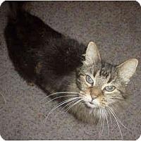 Adopt A Pet :: Anastasia - Colmar, PA