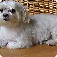 Adopt A Pet :: Romeo - Toluca Lake, CA