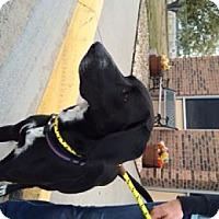Adopt A Pet :: Toliver - Evergreen, CO