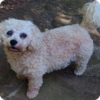 Adopt A Pet :: Suzie - Ball Ground, GA