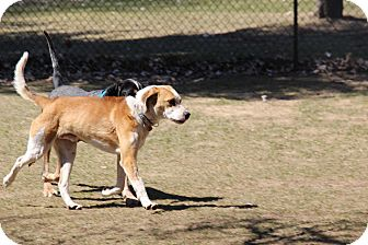 Hound (Unknown Type) Mix Dog for adoption in Colborne, Ontario - Murphy