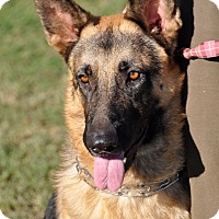 German Shepherd Dog Dog for adoption in Dripping Springs, Texas - Jake