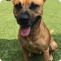 Adopt A Pet :: Millerville - Covington, LA