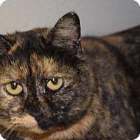 Adopt A Pet :: Evette - Pottsville, PA