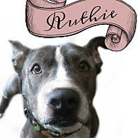 Adopt A Pet :: Ruthie-Low Rider - Des Moines, IA