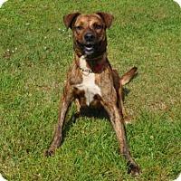 Adopt A Pet :: DORY - Naples, FL