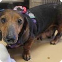 Adopt A Pet :: Ella - New Smyrna Beach, FL