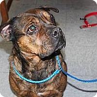 Adopt A Pet :: Rosie #2 - Chicago, IL