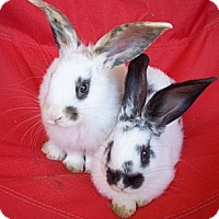 Adopt A Pet :: Tecate & San Ysidro - Santee, CA