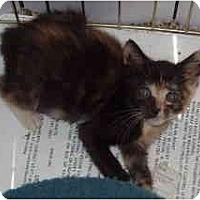 Adopt A Pet :: Baby Ruth - Davis, CA