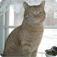 Adopt A Pet :: Romeo - Arlington, VA