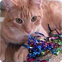 Adopt A Pet :: Sparky - Jenkintown, PA