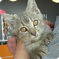 Adopt A Pet :: AUDI - Madison, AL