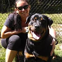 Adopt A Pet :: Madison - Cuddebackville, NY