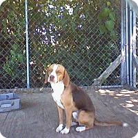 Adopt A Pet :: Mitch - Huntingburg, IN