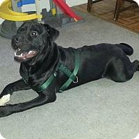 Adopt A Pet :: Knight - Garwood, NJ