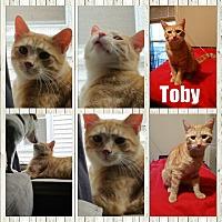 Adopt A Pet :: Toby - Eastpointe, MI