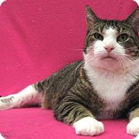 Adopt A Pet :: Molly - Redwood Falls, MN