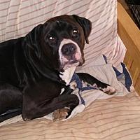 Adopt A Pet :: Rocky - Loganville, GA