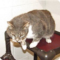 Adopt A Pet :: Absalom (adult male) - Harrisburg, PA