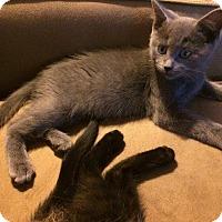 Adopt A Pet :: Cork - St. Louis, MO