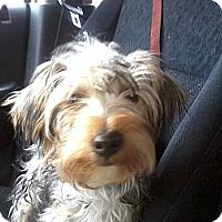 Adopt A Pet :: Painter - Cumberland, MD