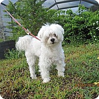 Adopt A Pet :: Sir Duke - N. Fort Myers, FL