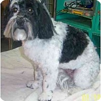Adopt A Pet :: FINNEGAN - Rossford, OH