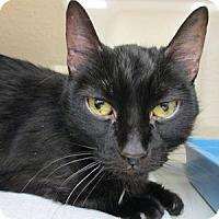 Adopt A Pet :: Katniss - Gilbert, AZ