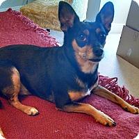 Adopt A Pet :: Porter - Santa Monica, CA