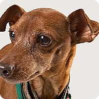 Adopt A Pet :: Donovan - Columbus, OH