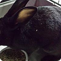 Adopt A Pet :: Zeek - Ortonville, MI