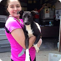Adopt A Pet :: Stormy - Stamford, CT