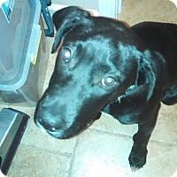 Adopt A Pet :: Jake - Ball Ground, GA