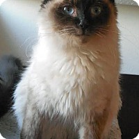 Adopt A Pet :: Trent - Palo Cedro, CA