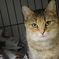 Adopt A Pet :: Twyla - Pottsville, PA