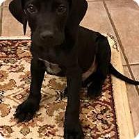 Adopt A Pet :: Hansel - Marlton, NJ