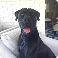 Adopt A Pet :: Run - Broomfield, CO