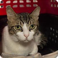 Adopt A Pet :: Kitty Kitty - Daleville, AL